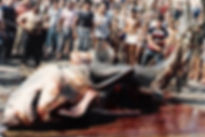 gallipoli-1979_6.2m.jpg
