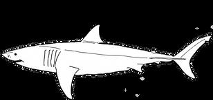 vithajsafari-logga-svart.png
