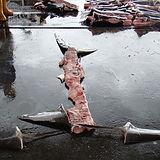 hajfenfiske_nya_metoder.jpeg