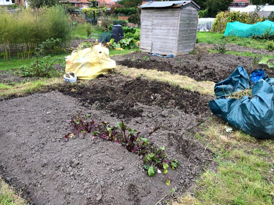 Vegetable beds dug over and weeded.
