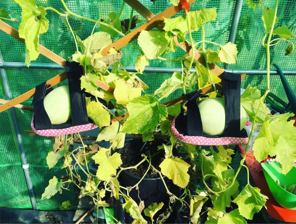 Melon Slings!