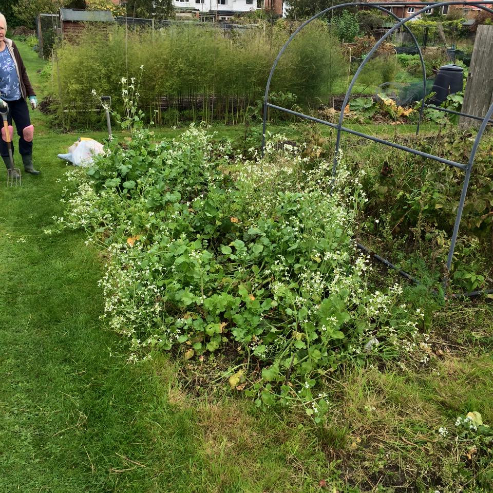 A bed of radishes gone to seed, carrotts and beetroot! (and plenty of weeds)
