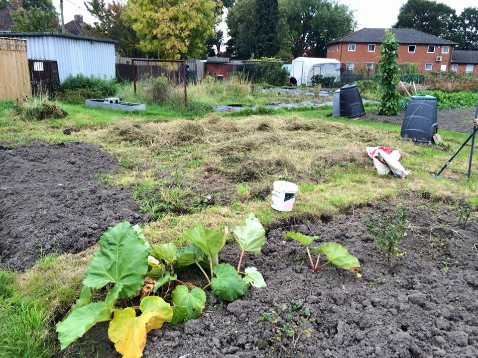 Allotment is taking shape!