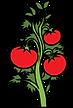 tomatologo.png
