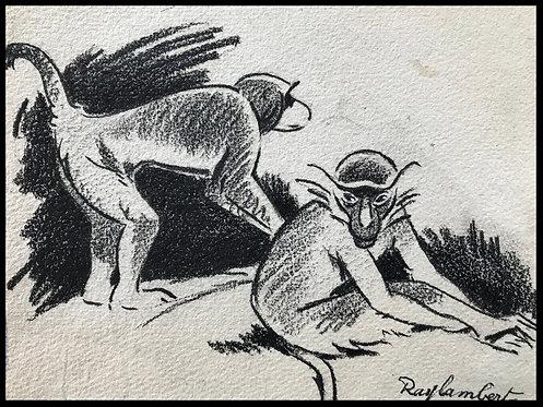 Ray Lambert (1889-1969)- Fusain au deux singes