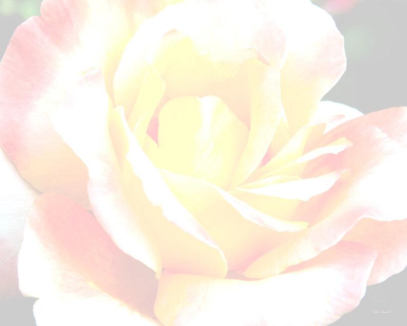 Rose (c) 2020.jpg