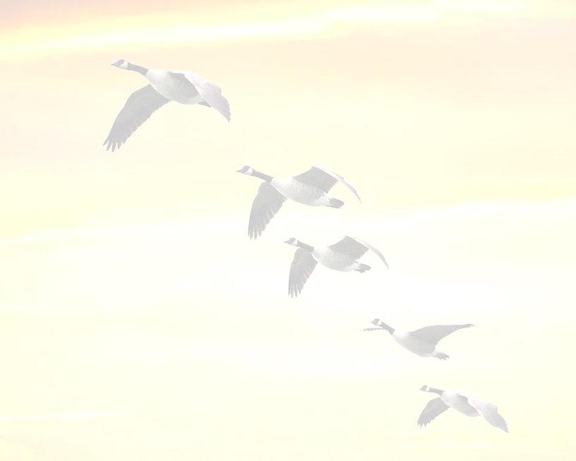 Geese (c) 2020.jpg