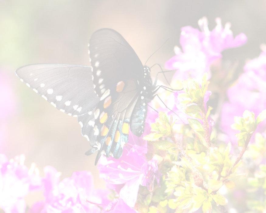 Butterflies (c) 2020.jpg