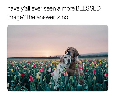 dogs with tulips.png