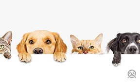 grooming cats and dogs.jpg