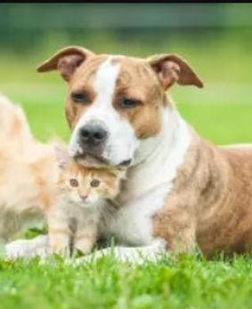 preventive care cat dog.jpg