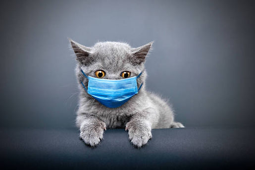 surgery kitty with mask.jpg