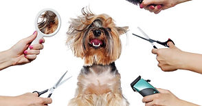 grooming dog stylin.jpg