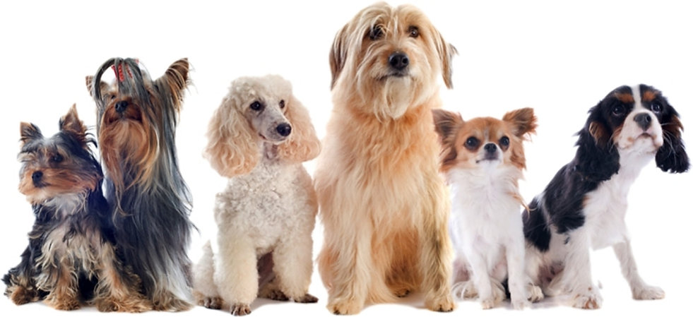 dog pics1.jpg