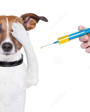 vaccination needle arm.jpg