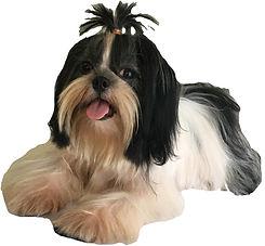 kim's pup 2-cutout.jpg