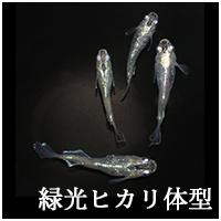 緑光ヒカリ体型トップ.png
