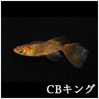 CBキングトップ.png