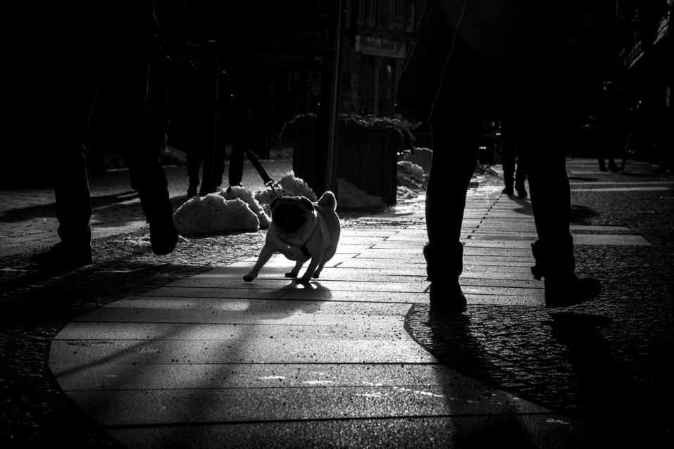 Hund im Gegenlicht.jpg