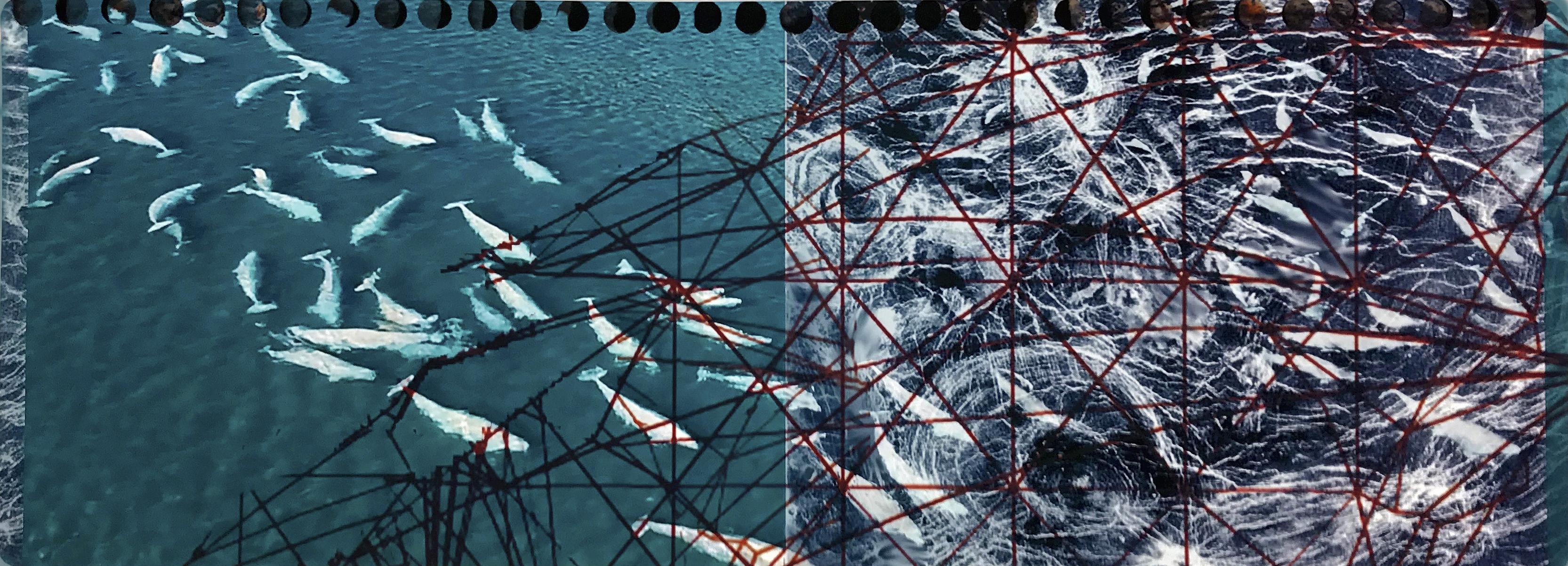 Cornell   Anthropocene - Entanglement