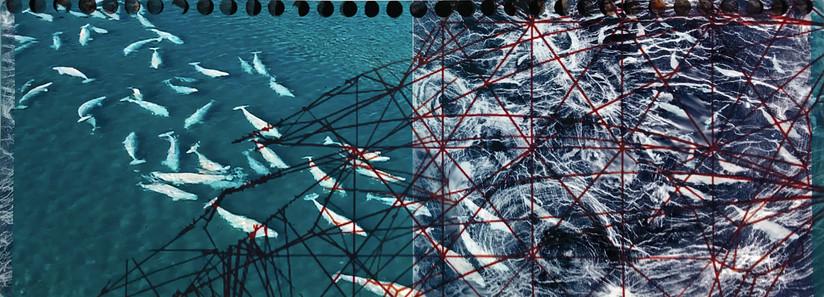 Anthropocene - Entanglement