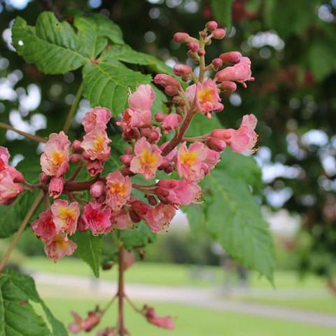 Alexandra Palace Flower