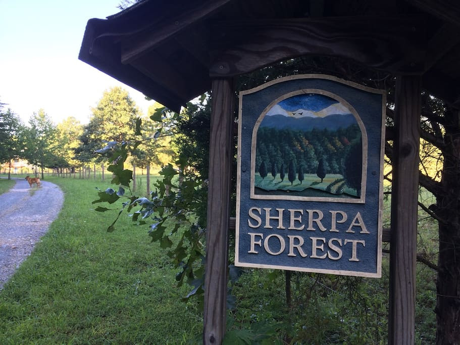 Sherpa Forest - recipients of REAP Grant