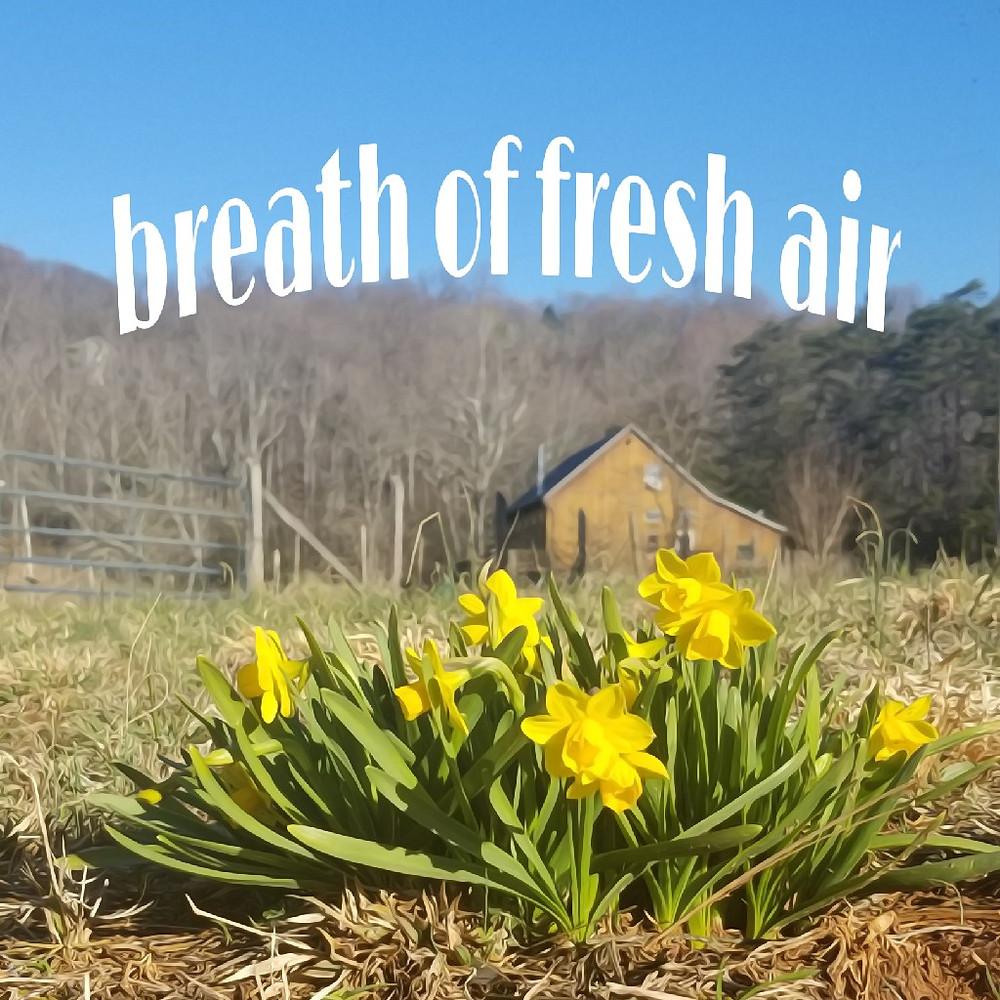 breath of fresh air - spring at home