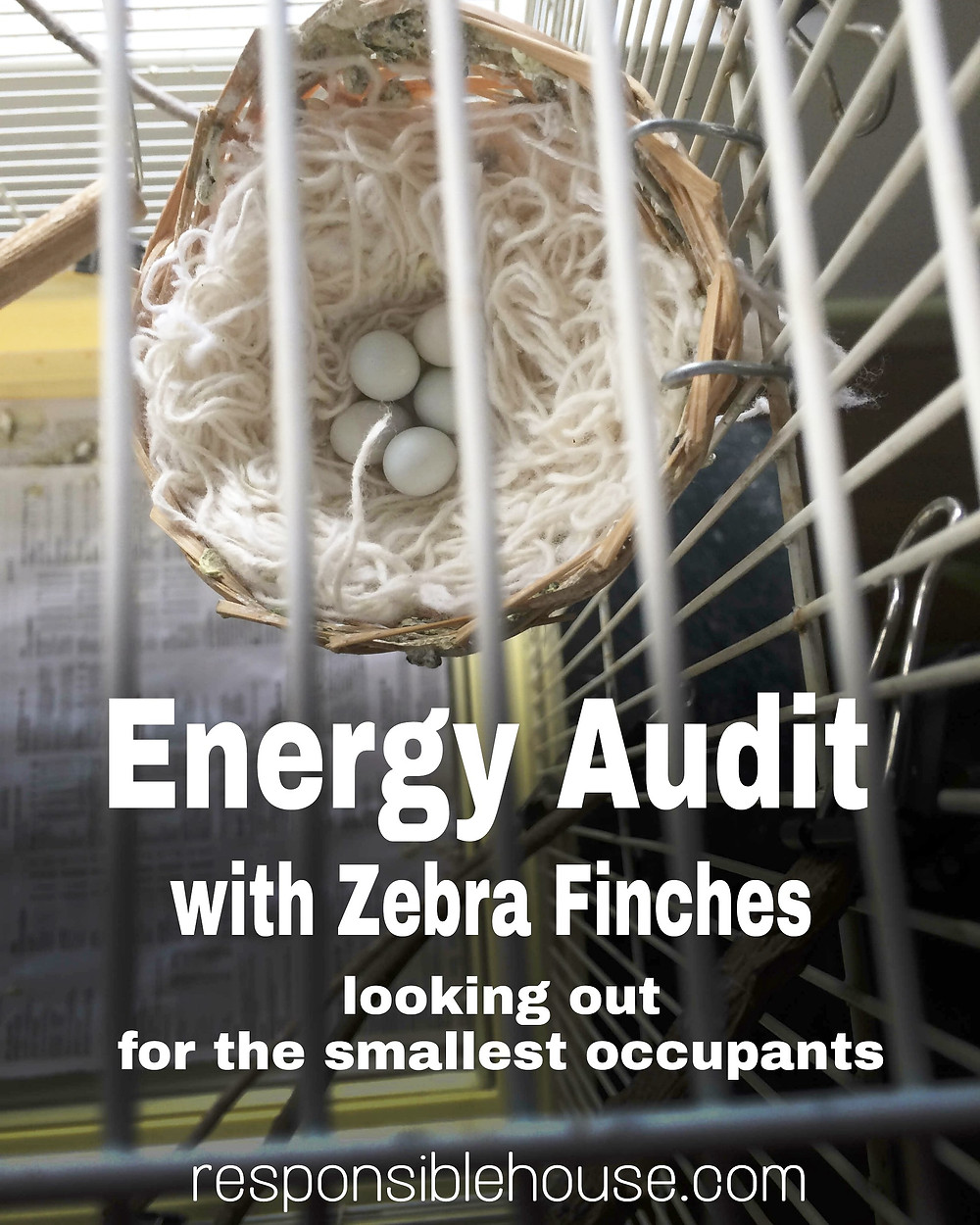 Energy Audit with Zebra Finches