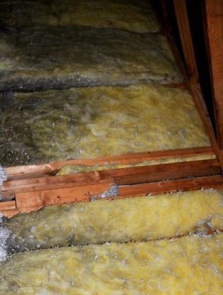 modern day asbestos - MOLD