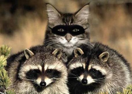 funny-animals-141-2.jpg