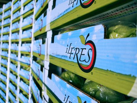 ILFRES: in anticipo la campagna della lattuga Iceberg d'importazione a marchio proprio