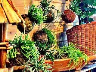 植物の装いも新たに