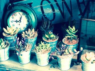とっても愛らしい植物