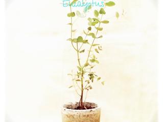 World plant