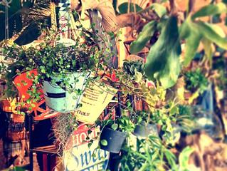 Hannginng plants