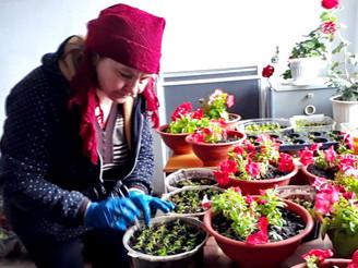Проект президентского гранта «Цветы для ветеранов» подготовит более 5000  цветов к Дню Победы…