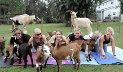 02 home page - goaties_3