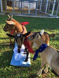 03 Goat Yoga w Suzanne_4.JPG