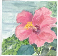 Gail's flower 6-2013.jpg