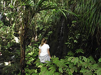 Woman enjoying the native New Zeland bush
