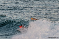 Dolphins and Surfer