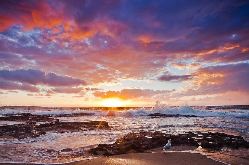 Seagull Rise