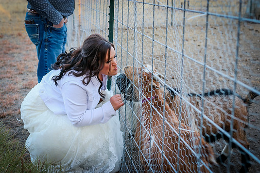 Bride with her fainting goats