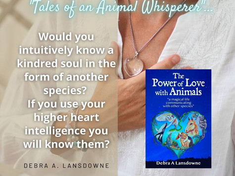 Would you know a kindred soul as another species?