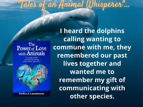 I heard the Dolphins calling me wanting to communicate with me ?