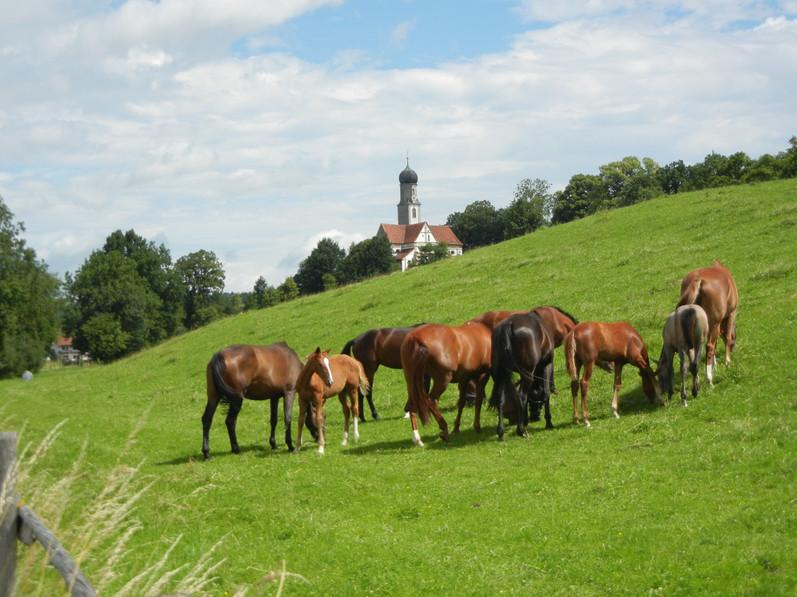 Pferdeherde mit Blick auf Ottilienkirche