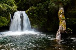 1390401464_parque_nacional_puyehue_11