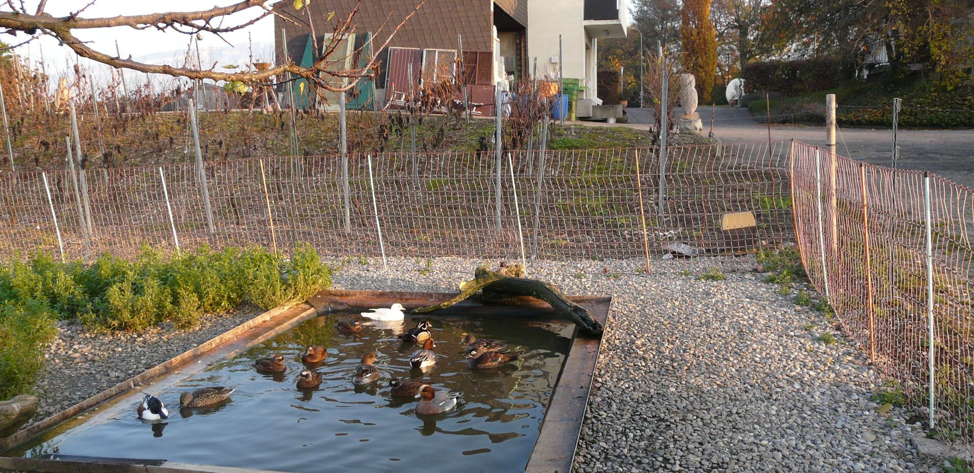 Un autre étang pour les anatidés