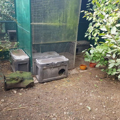Hedgehog aviary